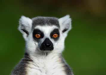 Luxury hotel launches yoga with lemurs