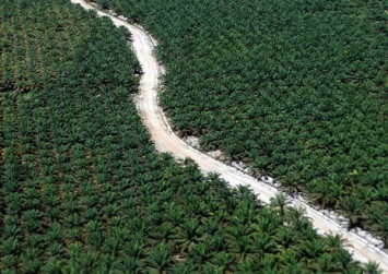 Indonesia government pins hope on international study favoring palm oil