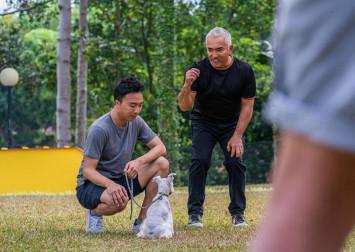 Why the Platinium Dogs Club saga doesn't shock Dog Whisperer Cesar Millan