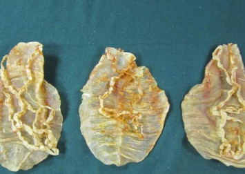 China prosecutes 11 people for smuggling $162 million worth of endangered totoaba fish