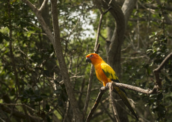 Big Brother-style surveillance gives new insight into Amazon jungle's hidden wildlife