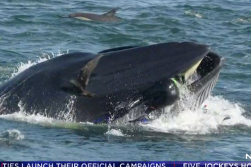 Whale nearly swallows South African conservationist