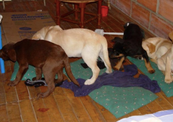 Colombia vet who smuggled heroin to US in puppies sent to prison