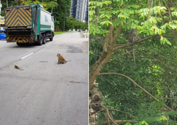 Baby monkey lying on road saved by passers-by who helped divert traffic