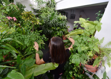 Welcome to the jungle... at HDB corridor in Pasir Ris