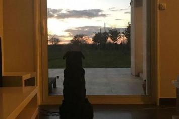 Sala's dog patiently awaits his return