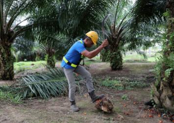 Malaysia criticises WHO's advice against palm oil during coronavirus