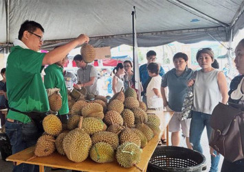 Dirt cheap durians draw crowds on second day of Malaysia's Musang King festival