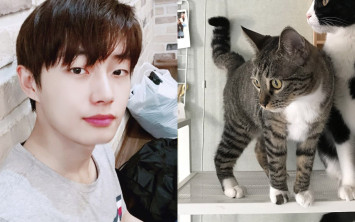 Korean pop idol under fire for allegedly abandoning his pet cat