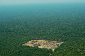 Brazil loses 'one million football pitches' worth of forest