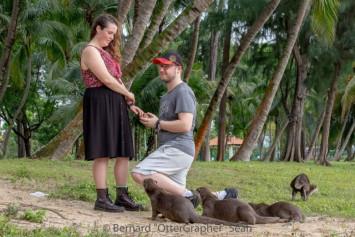 Bishan otters witness British couple's wedding proposal