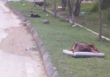 Doggone it: Dead strays found in Malaysia, believed to be poisoned