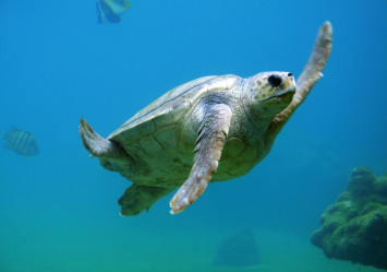 5 sea turtles found dead within 2 weeks near coal-fired power plant in Indonesia