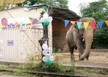 Pakistan's lonely elephant serenaded 1 last time at farewell party