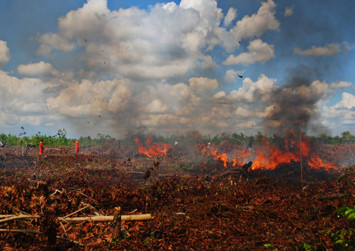 WWF urges Indonesian govt to be more serious about protecting peatlands