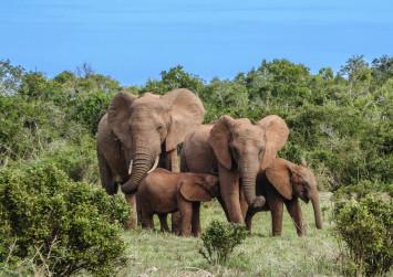 5 wild elephants trample Thai man to death