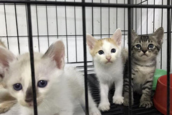 Thai police investigating DJ who allegedly tortured cats and uploaded videos on dark Web