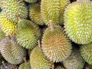 Demand for durians threatens tigers, water supply in Malaysia as jungles razed