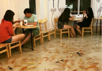 Vietnam's fish-filled 'koi cafe' tanks after accusations of animal abuse