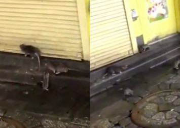 Footage of rats taking over Shibuya after Typhoon Hagibis blow up on Twitter