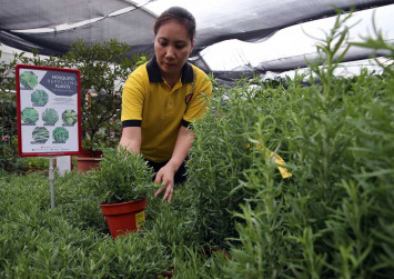 Growing demand for anti-mozzie plants