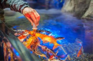 UK woman kills cheating ex-boyfriend's pet fish with bleach