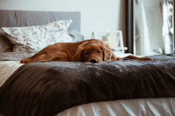 How to keep your home clean and fresh even with pets around