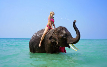 Stop cruelty when travelling, don't ride elephants