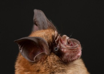 Covid-19 origins: Chinese study uncovers over 140 bat coronaviruses but says none linked to pandemic