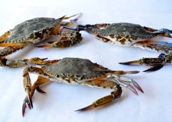 6 things to look out for when choosing a crab