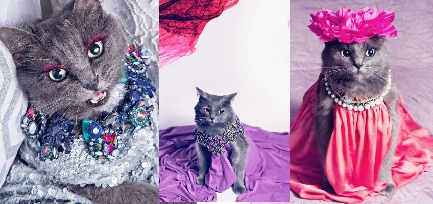 Cat lover rescues dying cat, transforms it into glamour puss with fashion shoots