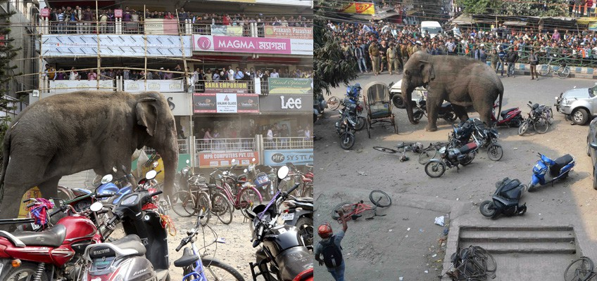 Wild elephant invades Indian town damaging 100 homes & vehicles