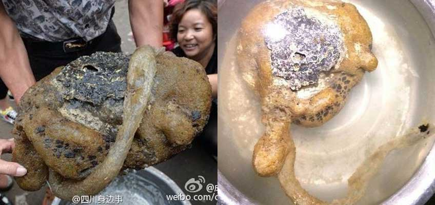 Sichuan villager catches weird-looking creature thought to be rare fungus