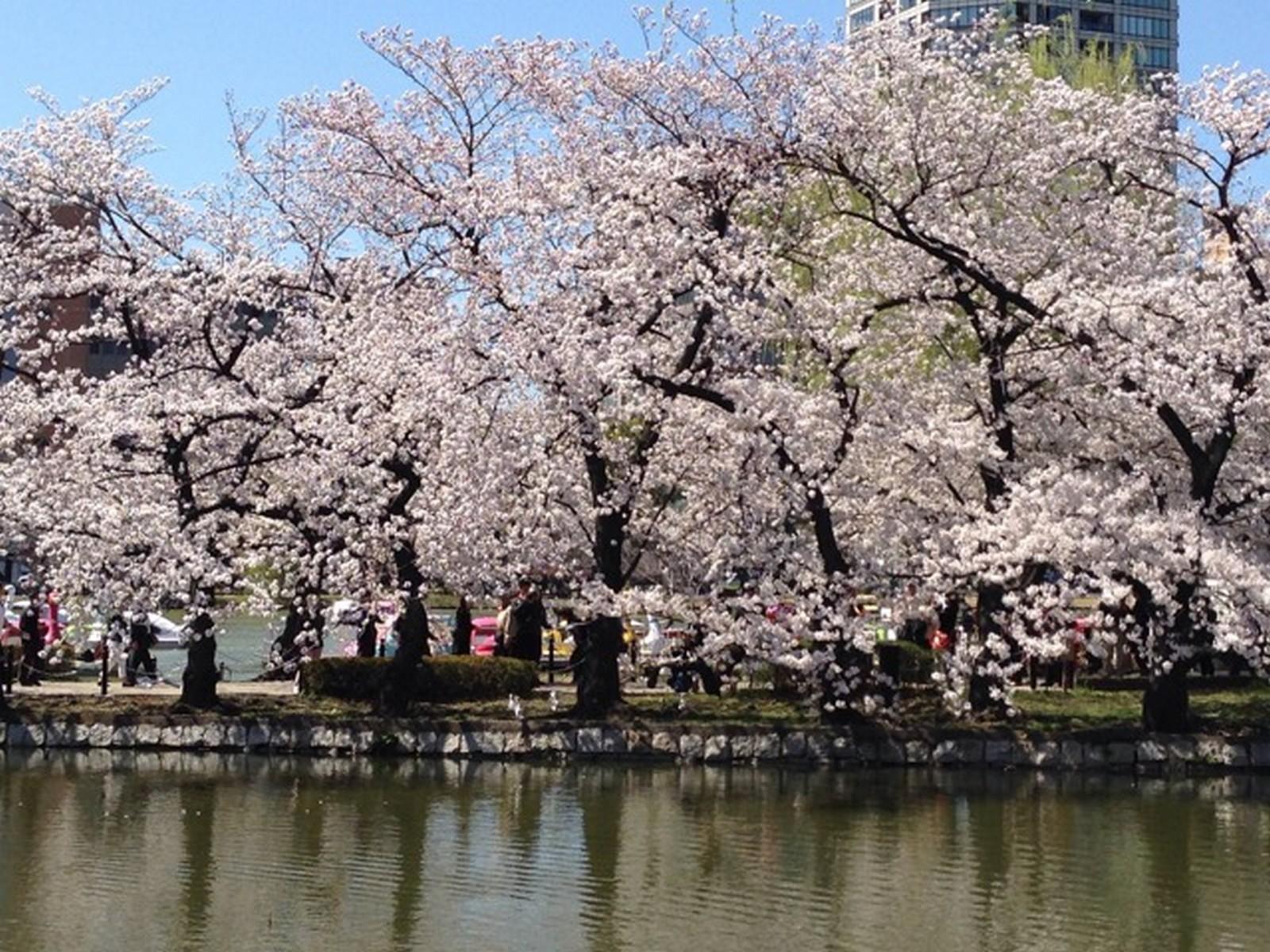 830f090a12a Discover Tokyo  A travel guide for Singaporeans
